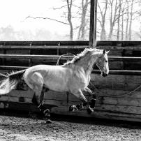 shooting equestre