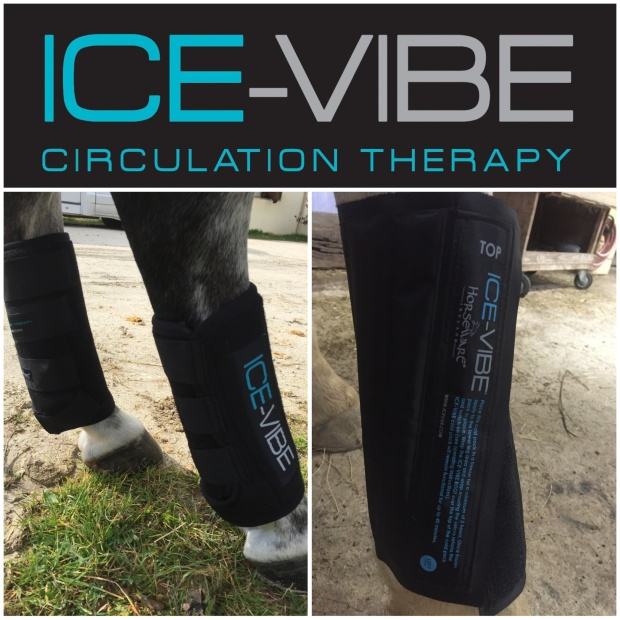 guetres ice vibe horseware