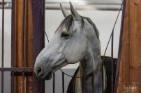 Découverte des installations de l'ecole nationale d'équitation de saumur ©Franck Simon