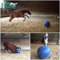 #61 J'ai testé pour vous les ballons pour chevaux